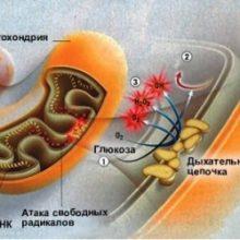 Защищено: Видео-урок. Двумембранные органоиды клетки: митохондрии и хлоропласты