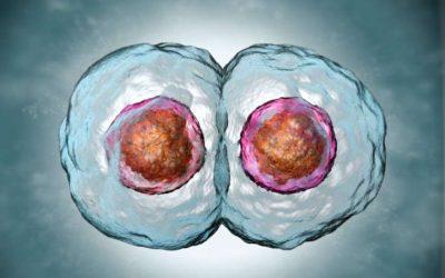 Видео-урок. Клеточный цикл. Митоз