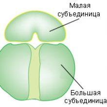 Урок онлайн. Синтез белка