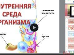 Защищено: Видео-урок. Эритроциты