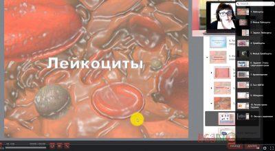 Видео-урок. Лейкоциты. Тромбоциты