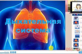 Видео-урок. Дыхательная система