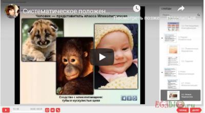 Видеоурок. Систематическое положение человека
