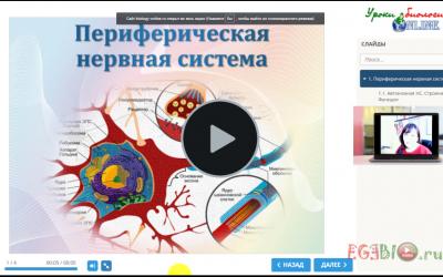 Видеоурок. Периферическая нервная система